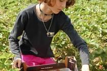 Tereza Aichingerová z Novákovic chodí na jahody pravidelně