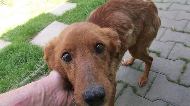 Týraní psi z Měcholup.