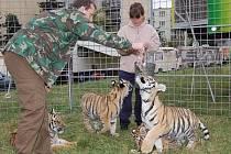Krmení zvířat v cirkuse Jo - Joo si vyzkoušel i šéfredaktor Klatovského deníku Milan Kilián