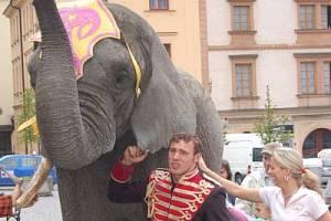 Slon, který měl ženě ublížit, při prezenci cirkusu v ulicích Klatov.