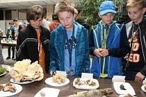 Výstava hub v kulturním domě v Klatovech.