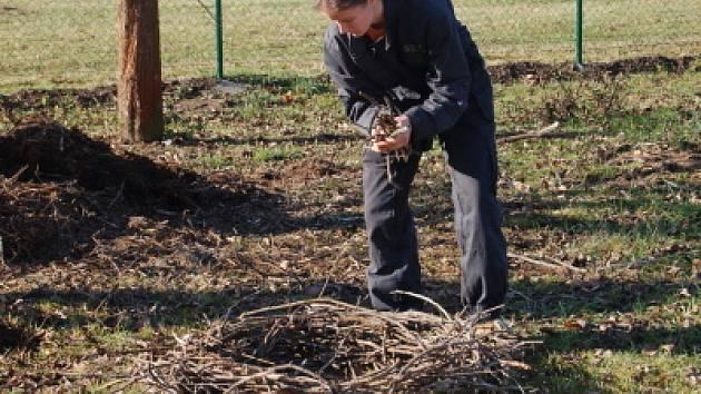 Výměna čapího hnízda v Měcholupech