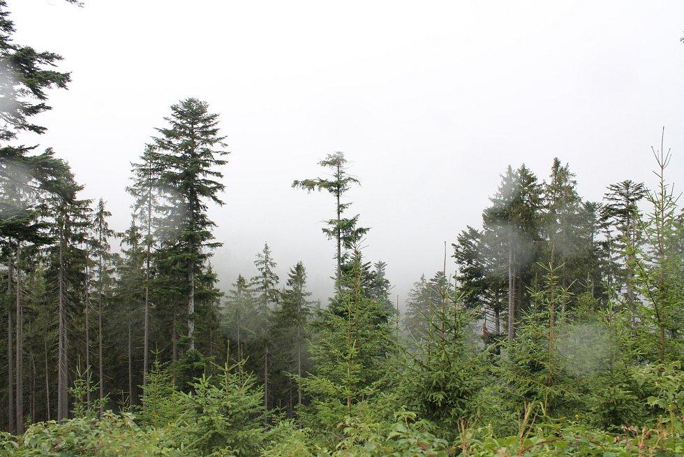 Průvodci divočinou 2015 - Černé jezero