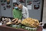 Výstava hub v Klatovech 2021.