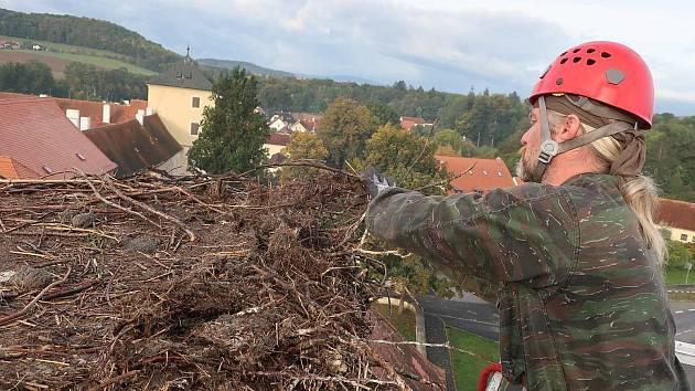 Snižování čapího hnízda v Horažďovicích.  Foto: DESOP
