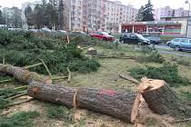 Kácení stromů v Podhůrčí v Klatovech.