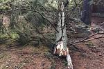 Během orkánu Herwart spadl strom i na hotel Modrava. Za poslední měsíc a půl už druhý