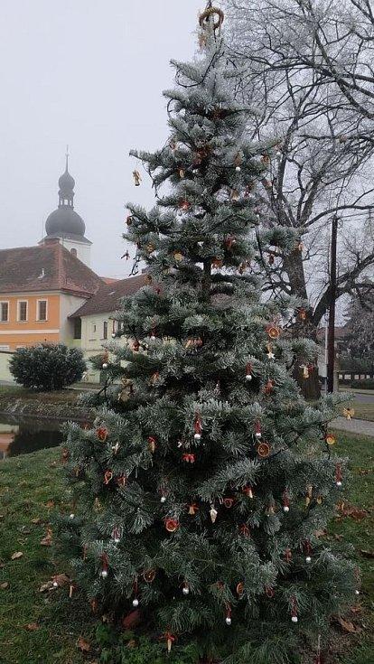 Zdobení vánočního stromu v Chudenicích.