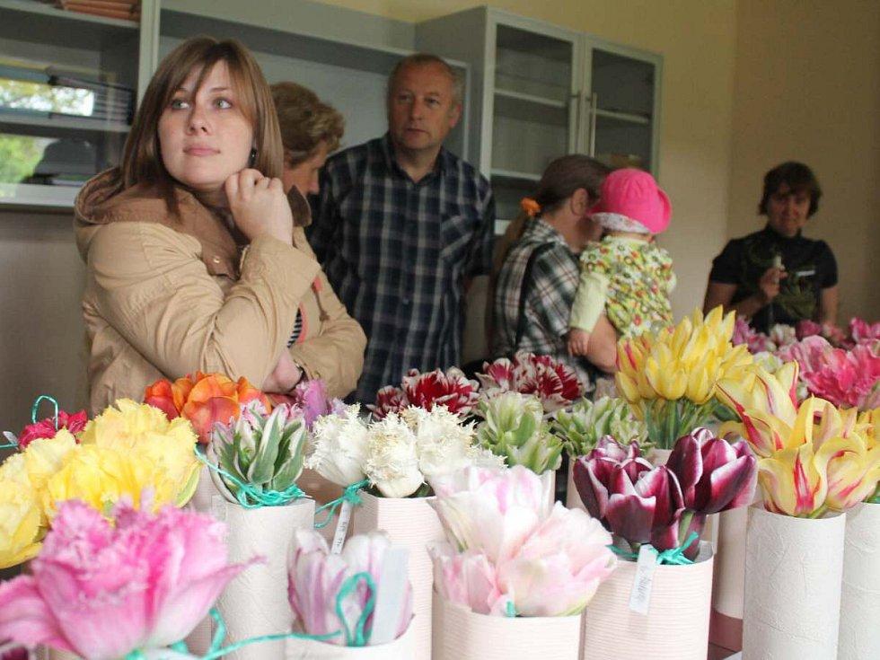 Výstava tulipánů Pavla Nováka v Dlažově