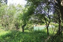 Vzrostlé stromy ničí zahradu Milady Smolíkové z Klatov.