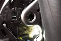 Ježek uvízlý v autě.