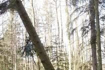 V Americké zahradě u Chudenic, nejstarším českém arboretu, v těchto dnech řvou motorové pily