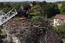 Snižování hnízda v Těchonicích.