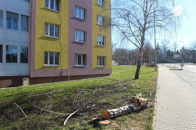 V Klatovech bylo letos pokáceno 52 stromů po celém městě.