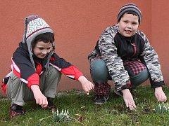 V klatovském sídlišti Za Beránkem v těchto dnech dokonce vykvetly sněženky. Zaujaly i Toníka a Mařenku, kteří si je šli prohlédnout zblízka.