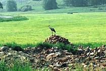 Čápi a volavky už asi na zelenou louku u Kašovic nepřiletí. Museli by hnízdit na hromadě suti.