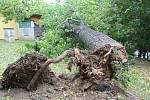 V Klatovech spadl při vichřici strom na zahradní domek.