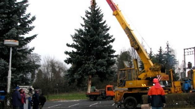 Kácení vánočního stromu pro klatovské náměstí