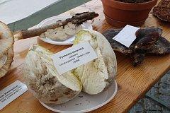 Výstava hub na náměstí v Sušici