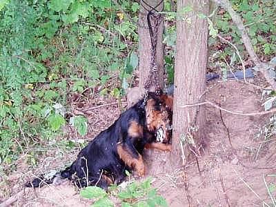 Utýraný pes u Hrádku