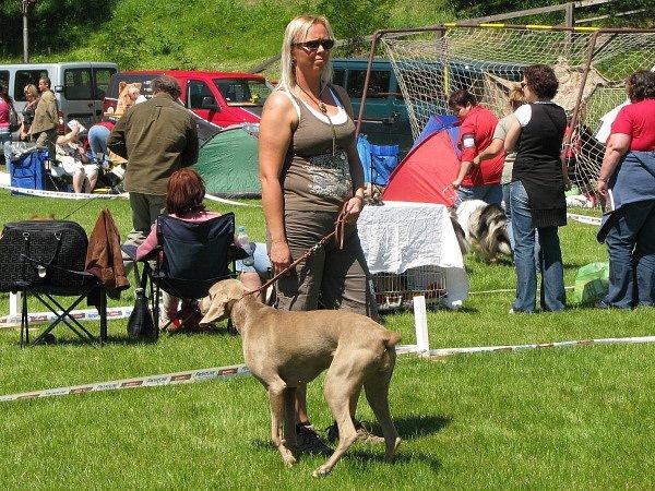 Národní výstava psů v Klatovech