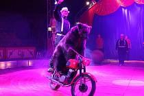 Klatovy Cirkus Berousek