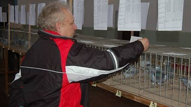 Výstava holubů v Točníku.