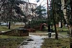 Orkán Sabine řádil na Klatovsku. Strom pod nemocnicí v Klatovech. Foto: Káta Kadlecová
