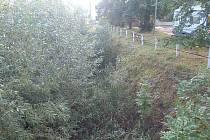 Zarostlý potok v Jíně