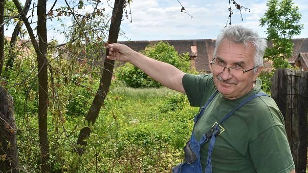 Petr Mironěnko ukazuje stromy, které v Červeném Poříčí zahubila zatím neznámá látka.