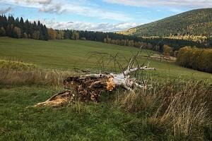 Známý suchý strom na Velkém Boru na Prášilsku.