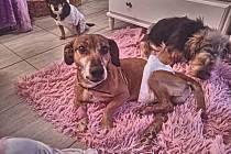 Odložený pes, kterého majitel zanechal u Horažďovic.
