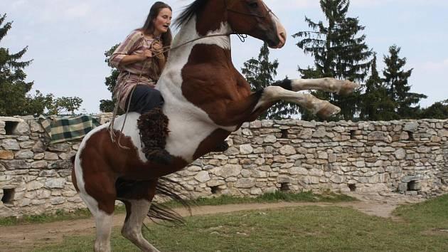 Ukázka výcviku bojového koně na hradě Kašperk.
