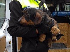 Nemocného psa vyhodili v igelitové tašce.