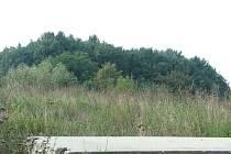 Les Boreček mezi Cerhenicemi a Cerhýnkami
