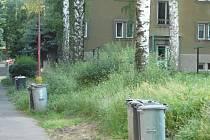 Zeleň v Bachmačské ulici ve středu po poledni