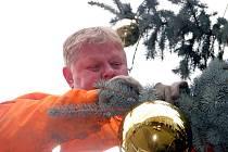 Zanedlouho se začnou na náměstích a návsích strojit vánoční stromy.