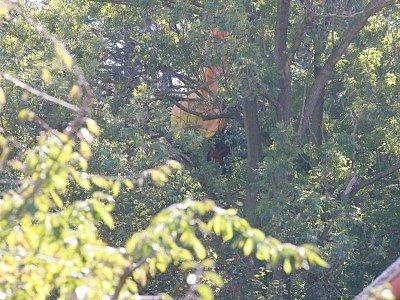 Parašutistka zaklíněná ve větvích vysokého stromu přilákala v neděli okolo poledne mnoho zvědavců. Nakonec vše skončilo bez újmy na zdraví.