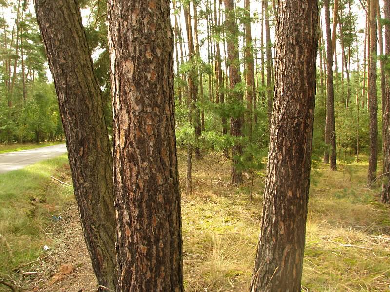 Lesy v okolí obce Jelen.