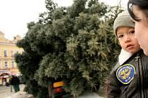 Stavění vánočního stromu.