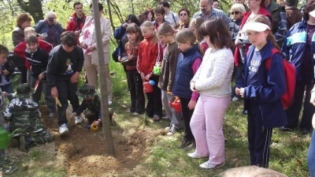 Děti z mateřinek při sázení památných stromů.