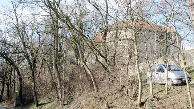 Farskou stráň pokrývají náletové dřeviny a akáty.