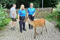 Městská policie Kolín dlouhodobě spolupracuje se Záchrannou stanicí pro handicapované živočichy Huslík v Poděbradech.