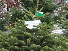 Prodej vánočních stromků. Ilustrační foto