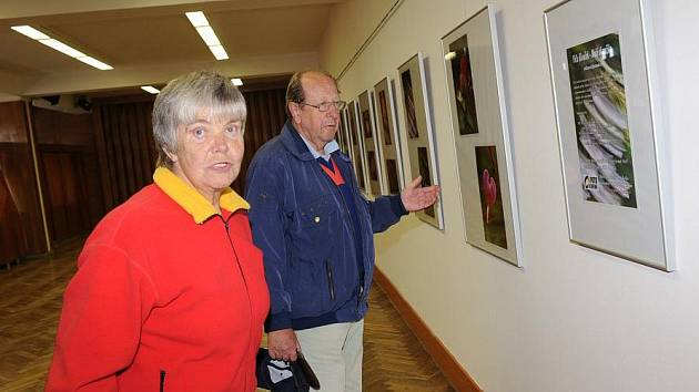 Prostory Městského společenského domu ozvláštnily dvě výstavy