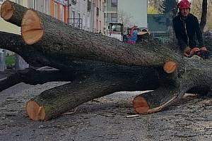 Kácení stromů - ilustrační foto