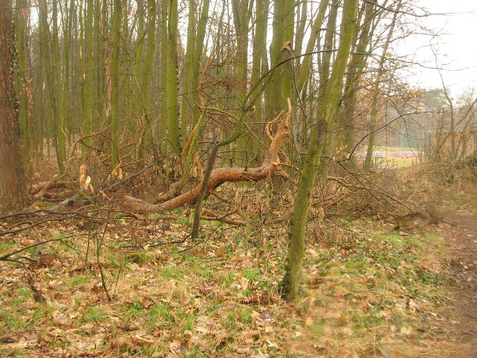 Z naučné stezky lesoparkem Borky v Kolíně.