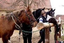 Vyjížďky na koních na Podlipansku