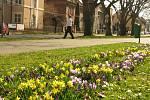 Jaro v Kolíně