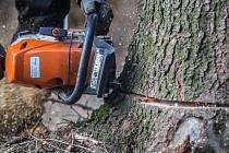 Kácení stromů napadených kůrovcem. Ilustrační foto.